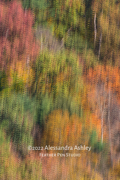 Mixed treescape of the Mohican Gorge at central Ohio's Mohican State Park in autumn. Captured with multiple exposure montage (in-camera effect).