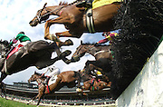 Horses  come over the top of the final jump in the Sport of Kings Maiden  Hurdle won by  Golden Marvel, and jockey Robert Massey at Keeneland on   thursday April 26, 2001 in Lexington, Ky.