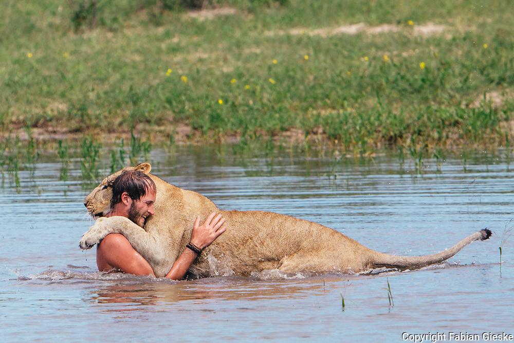 Valentin Gruener, Sirga, lioness, hand raised, kalahari, Botswana, Private Game Reserve, Water, Waterhole