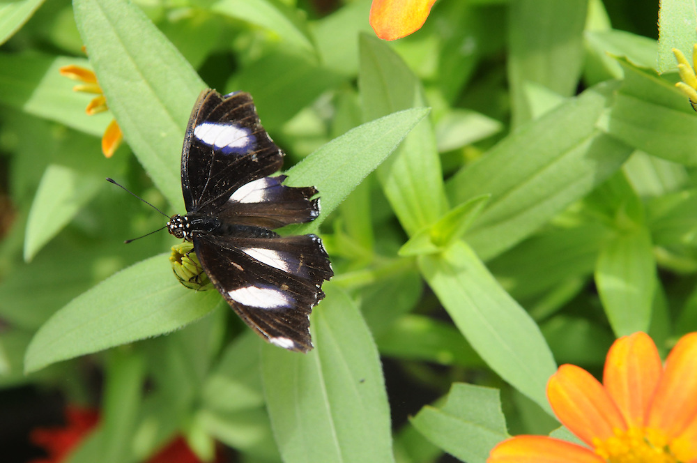 Butterflies at Brookside Gardens