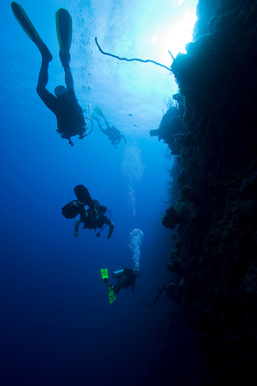 Cayman Islands, Little Cayman Island, Scuba divers swimming along Bloody Bay Wall in Caribbean Sea