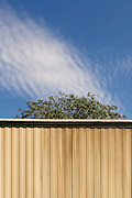 The pattern of a corrugated wall seems to be mimicked in a warped way by the cloud that is passing in the sky above it.  The top of a tree separates the wall from the clouds.