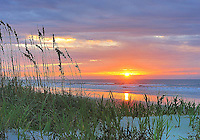 Isle of Palms sea oats sunrise