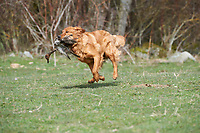 Cedar Retriever Training Day, Nanimo , British Columbia, Canada