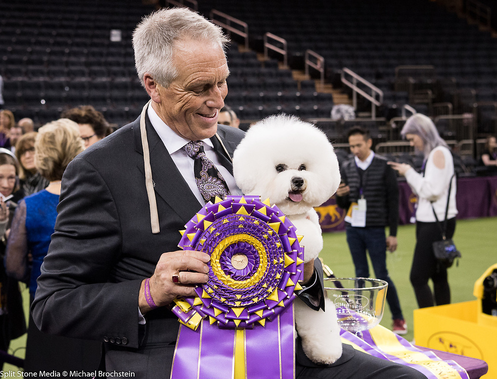 Flynn, a Bichon Frise, was the overall winner / Best in Show of the 142nd Annual Westminster Kennel Club Dog Show in New York, NY on February 13, 2018
