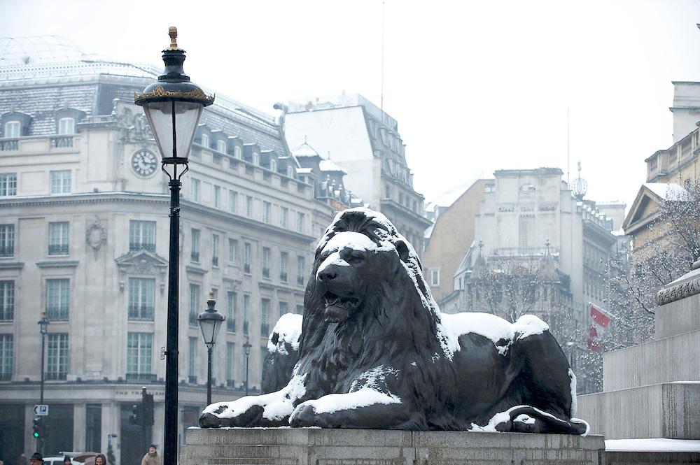 Lions in Trafalgar Square in the snow