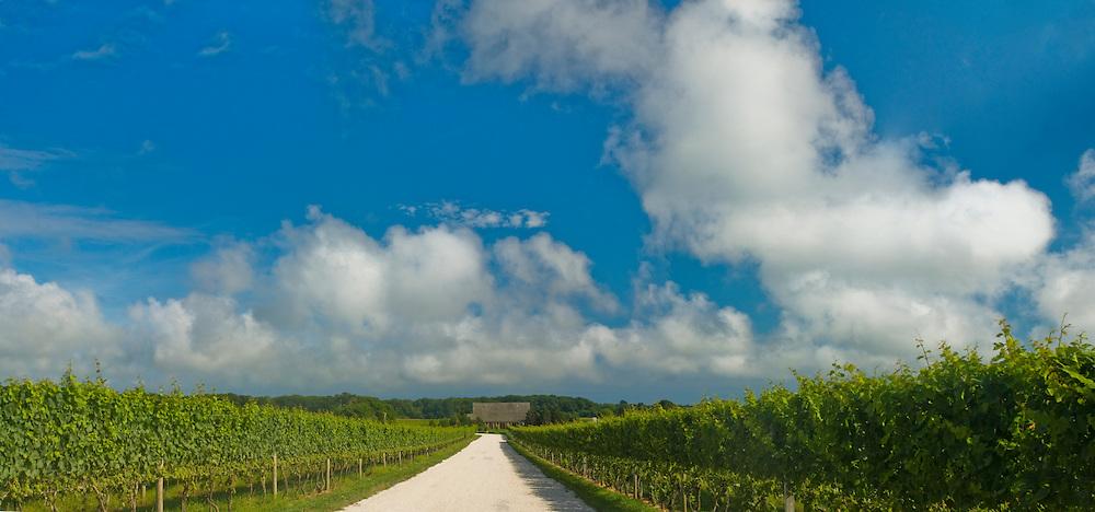 Channing Daughters Winery, dirt road, lNew York, Bridgehampton, Long Island, South Fork
