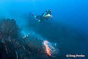 "videographer Shane Turpin films pillow lava erupting underwater at Kilauea Volcano, Hawaii Island ("" the Big Island ""), Hawaii, U.S.A. ( Central Pacific Ocean ) MR 382"