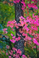 Autumn color in the Galiuros Mountains, Arizona