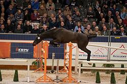 193 - Olando van den Heuvel<br /> KWPN Hengstenkeuring 2017<br /> © Dirk Caremans<br /> 01/02/2017