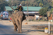 Phone chat on the elephant's back.  Photo from Assam, north-east India.
