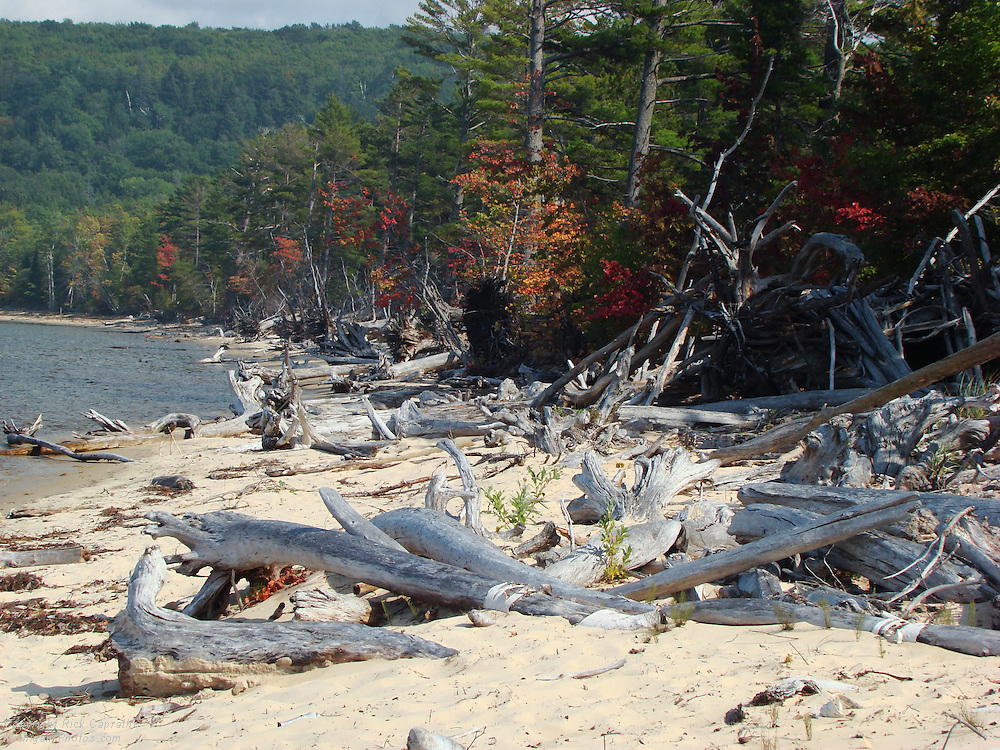 Beach Drift Trees & Driftwood, Sand Point, Pictured Rocks, Michigan's Upper Peninsula