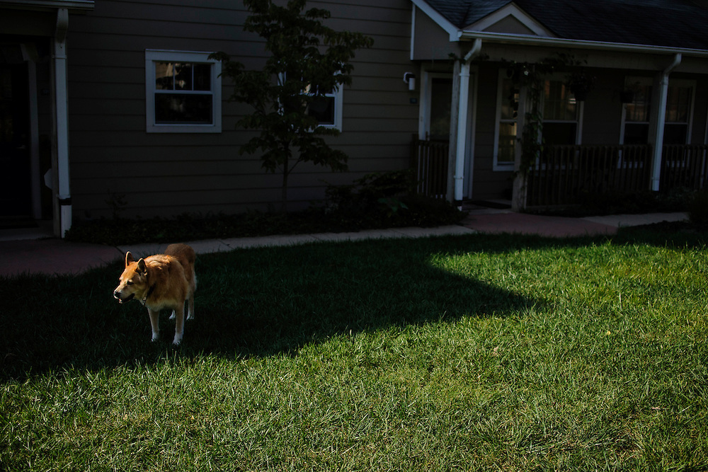 photo by Matt Roth..Takoma Village Cohousing resident Drew Kidder elderly dog Calle stands in the grass after a walk Saturday, September 22, 2012.