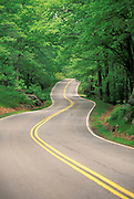 Country road winding through forest