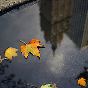 Carriage horse reflection and fall leaves in pool of water in Central Park, New York, NY