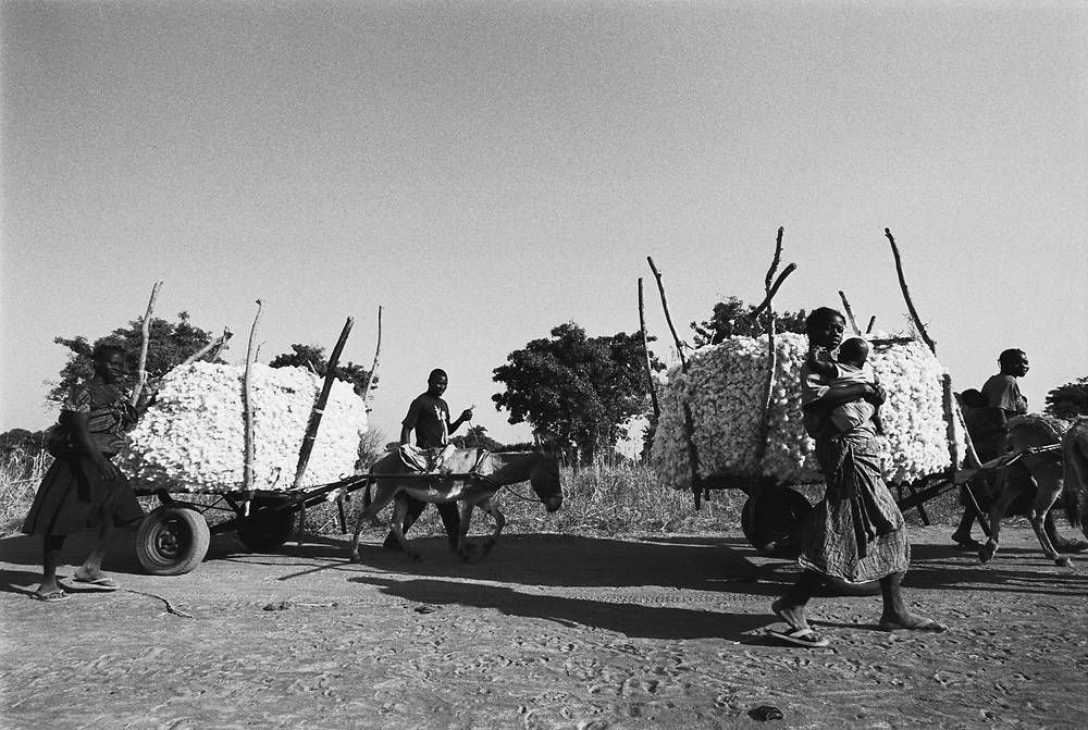 Cotton Farmers transport their cotton with mules to the nearest village to be weighed and transported to a processing plant..Koundougou, Burkina Faso. 11 December 2003..Photo © J.B. Russell
