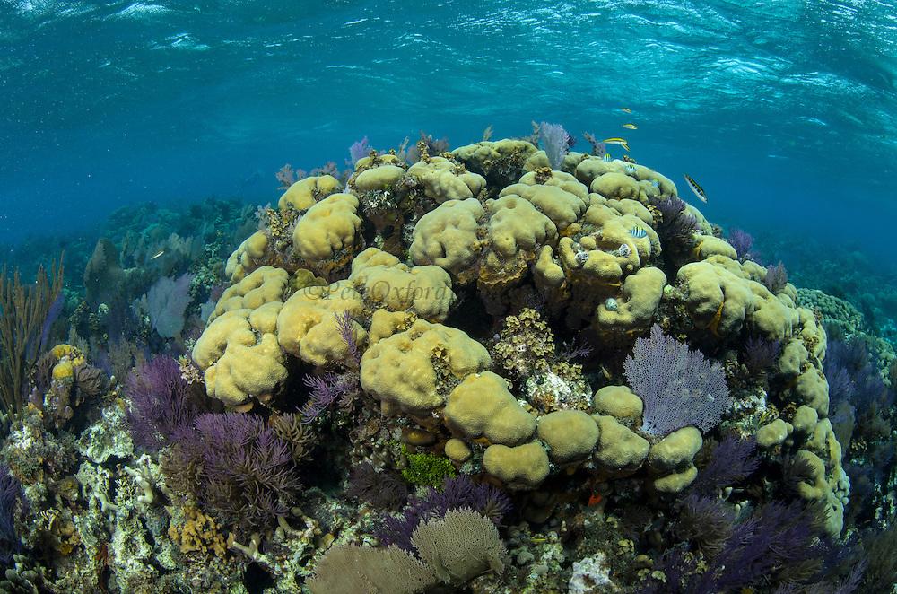 Coral reef diversity<br /> Banco Chinchorro, <br /> Offshore Atoll<br /> Yucatan Peninsula<br /> Mexico<br /> Central America