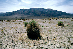 CA: Death Valley National Park, Devils Cornfield                          .Photo by Lee Foster, lee@fostertravel.com, www.fostertravel.com, (510) 549-2202.Image: cadeat223.