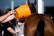 Indian Sounds ridden by Kevin Stott and trained by P T Midgley is cooled down after racing and winning in the attheraces.com Handicap (Class 6) (4YO plus) - Mandatory by-line: Robbie Stephenson/JMP - 25/06/2020 - HORSE RACING - Bath Racecoure - Bath, England - Bath Races 25/06/20