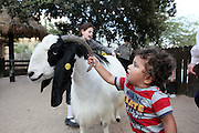 Child and goat in a petting zoo