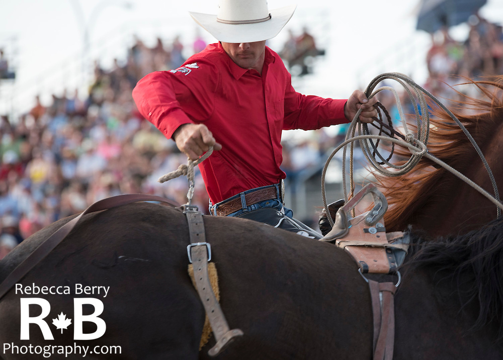 One of Big Stone Rodeo's pickup riders undoing the bucking strap from a bare back horse at the Mighty Fraser Pro Rodeo during Agrifair in Abbotsford B.C. July 31 -August 2, 2015.