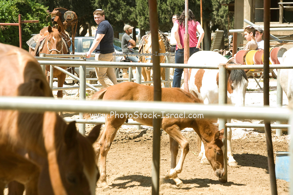 Tourists from the US visit the stable at Kibbutz Kfar Giladi (Est. 1916) in the Upper Galilee, Israel