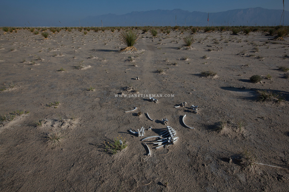 The skeletal remains of a young cow rest on the dried ground of the The Laguna Churince lake a few kilometers from Cuatro Ciénegas, in the Chuhuahuan Desert in Mexico's Coahuila state. The laguna used to be a vibrant ecosystem but due to the intense exploitation over the past decade of the aquifer that feeds it, the surface waters have disappeared, leaving the area looking desolate. Residents blame water extraction aimed at irrigating  large alfalfa fields nearby for this causing this disaster.