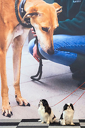 © Licensed to London News Pictures. 06/03/2014. Birmingham, UK. A dog pictured on a trade stand wall appears to stand behind two small dogs. Owners and dogs attend the first day of Crufts 2014 at the National Exhibition Centre, Birmingham, today 6th March 2014. Crufts, a four day competition, is the worlds largest dog show, attracting over 22,000 dogs and owners. It had its first show in 1891. Photo credit : Stephen Simpson/LNP