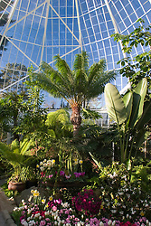 Greenhouse at W.W. Seymour Botanical Conservatory, Tacoma, Washington, United States