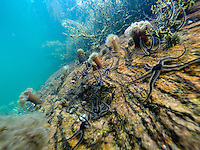 Norwegian coast under water