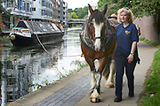 © Licensed to London News Pictures. 23/08/2012. London, UK Ilkeston, a restored narrowboat, is towed by a horse across London's canal network, on its way to the London Canal Museum. It has journeyed from Ellesmere Port in Cheshire, through more than 100 locks, to London to celebrate its 100th birthday.. Photo credit : Stephen Simpson/LNP
