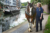 2012_08_23_Canal_horse_SSI