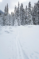 Cross-country ski tracks through a forest meadow, Washington State Central Cascades