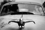 An old metal hood ornament on an old vehicle found along Route 66. Missoula Photographer