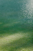 Water spray on grass in afternoon sun.