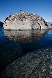 """Bonsai Tree on Lake Tahoe Boulder 2"" - This little pine tree on a island boulder was photographed near Speedboat Beach, Lake Tahoe"