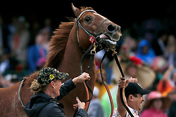 May 4, 2019 - Louisville, Kentucky, U.S. - Country House (20) wins the 145th running of the Kentucky Derby after Maximum Security (7) was disqualified on May 4, 2019 at Churchill Downs, in Louisville. (Credit Image: © Jeffrey Brown/Icon SMI via ZUMA Press)