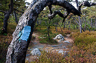 Kerhonkson, New York -Trail markers on trees at Minnewaska State Park during the Shawangunk Ridge Trail Run/Hike 32-mile race  on Sept. 20, 2014.