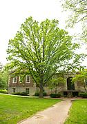 college green*, Mapp Athens*, Tree Tour*, Burr Oak