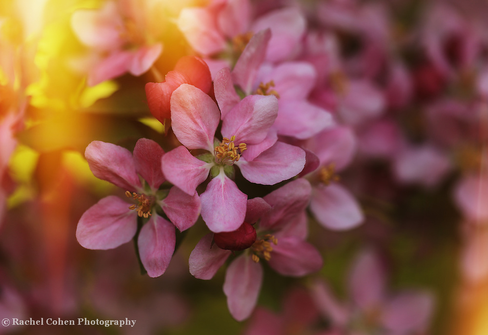 &quot;Let the Sun Shine In&quot;<br />