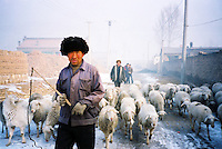China, Luyashan, 2007. Early morning with a shepherd near Luyashan in Shanxi Province. Such work has remained virtually changeless over time..
