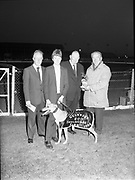 Guinness 600 race in Shelbourne Park, Dublin,<br />