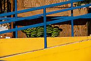 A stalk of bananas among bright colors of Puerto Rico.