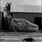 MISCELÁNEAS<br /> Photography by Aaron Sosa<br /> La Cerca, Estado Anzoategui - Venezuela 2001<br /> (Copyright © Aaron Sosa)