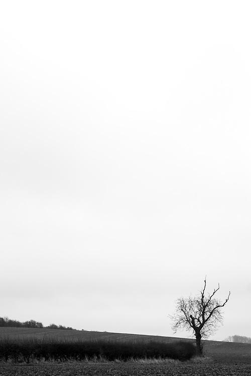 Tree, Rothley, Leicestershire, England.<br /> Photo: Ed Maynard<br /> 07976 239803<br /> www.edmaynard.com