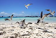 Un grupo de aves revolotea en la playa del Cayo Madrizquí ubicados en el Archipiélago de Los Roques, 29-09-06. (Iván González)El Parque Nacional Los Roques se encuentra a 176 kilómetros al norte de la ciudad de Caracas y constituye uno de los reservorios naturales más grandes del Caribe. Con 42 islotes, es considerado el parque marino más grande de América Latina.