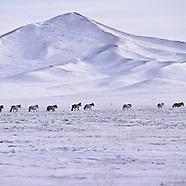 MN311 Mongol symbolic life