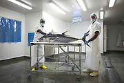Ex-Tsunami fishermen processing yellow fin tuna at Cyprea Marine Foods EU-standard factory at Himmafushi, Republic of Maldives.