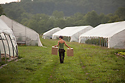 Emily Hammon carrys boxes for tomatos to a greenhouse at Green Edge Gardens in Amesville. Photo by Ben Siegel/ Ohio University