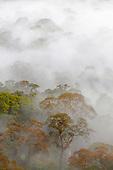 Danum Valley Conservation Area, Sabah, Borneo